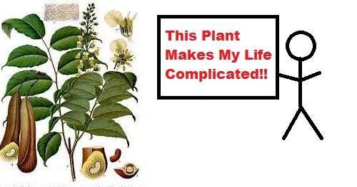 This Plant Makes My Life Complicated